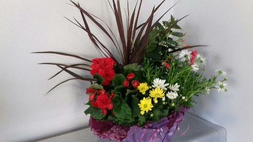 Coupe de plantes aux couleurs vives