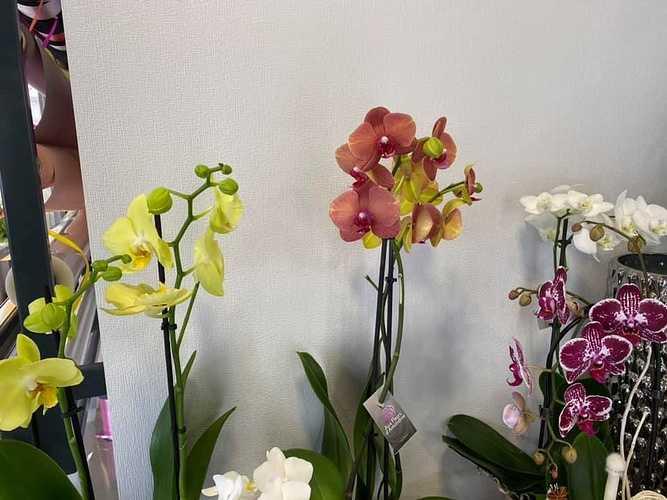 Orchidées violettes ou jaunes 0