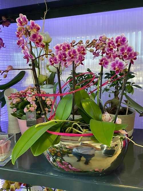 Orchidées roses 0