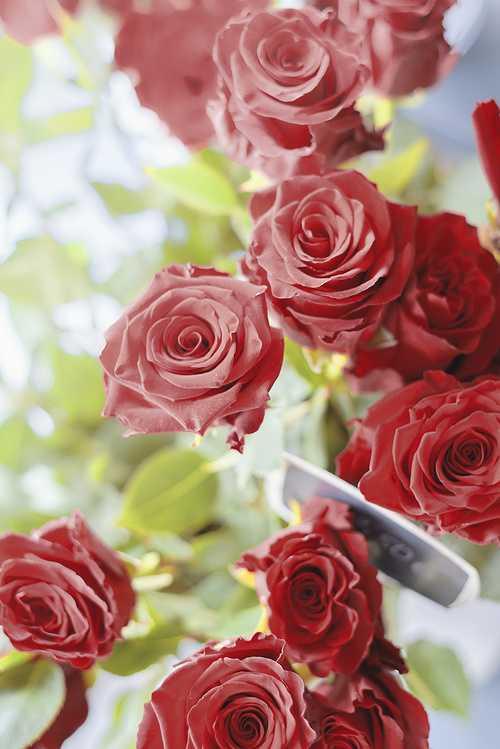 Fleurs coupées - Roses rouges 0