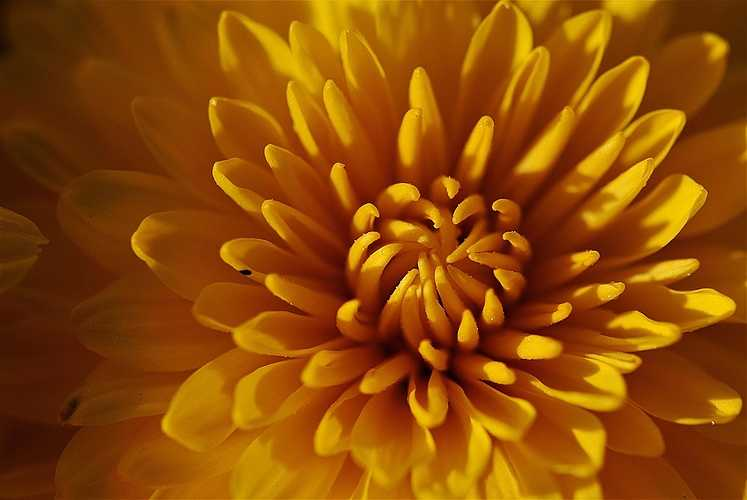 Fleurs et plantes de Toussaint 0